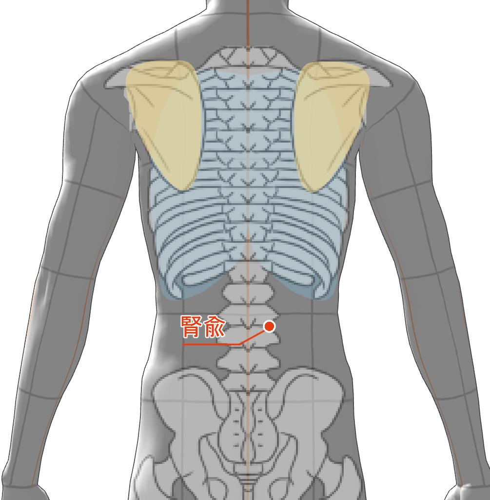 腎兪 ツボ 経絡 経穴