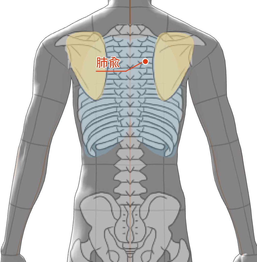 肺兪 ツボ 経絡 経穴
