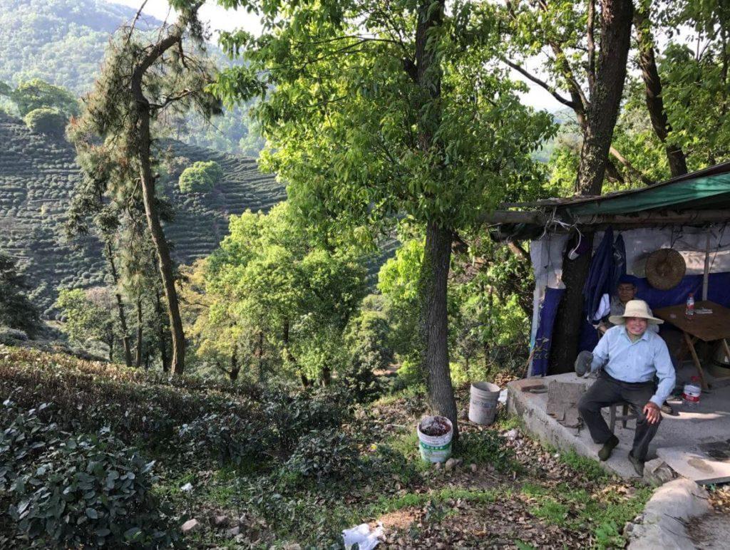 杭州 龍井 茶畑