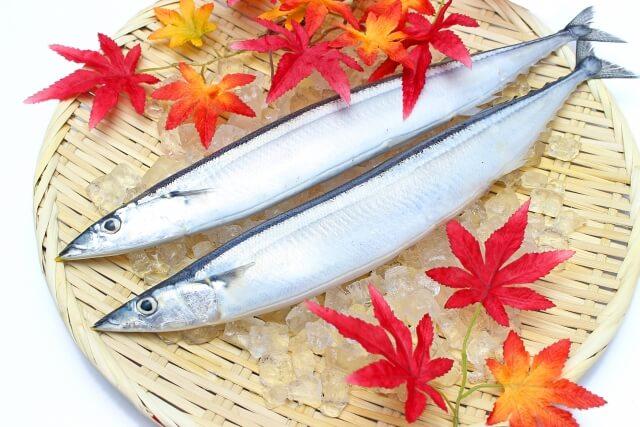 秋刀魚 サンマ 仲秋 白露 さんま