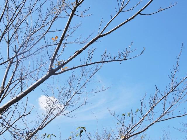 木枯らし一号 立冬 初冬