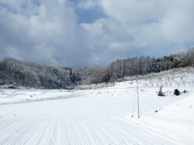 第六十六候 雪下出麦(ゆきわたりてむぎのびる) 仲冬 冬至