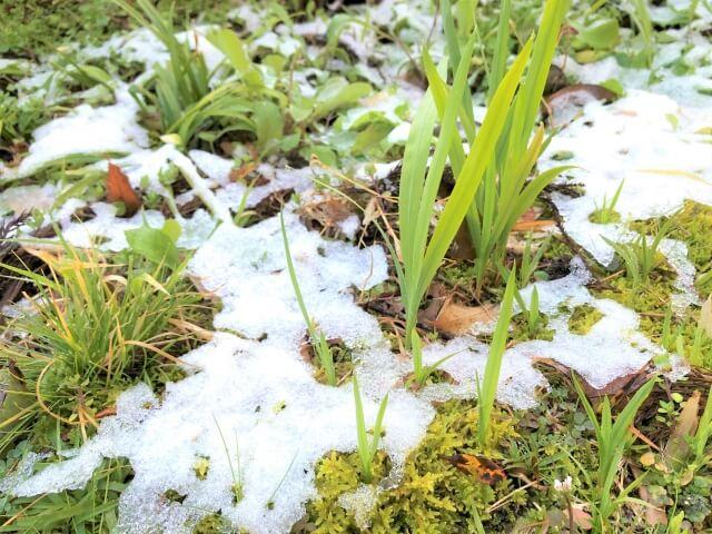 第四候 土脉潤起 (つちのしょううるおいおこる) 雨水 初春