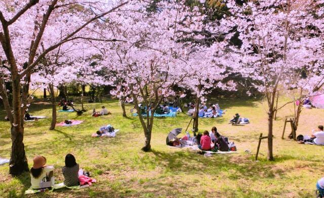 お花見 春 春分 仲春